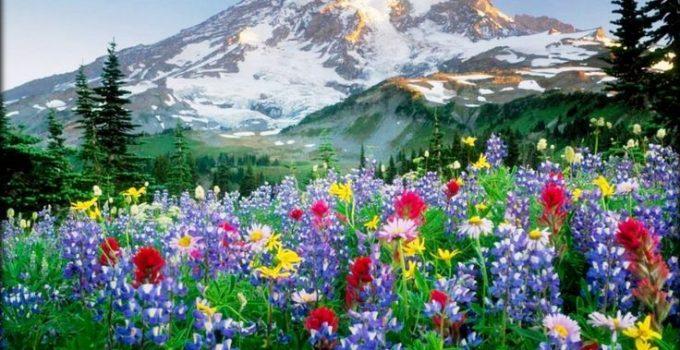 Adquiere Aqui Estos Fondos De Pantalla Con Flores Hermosas: Protector De Pantalla De Flores Hermosas Con Movimiento