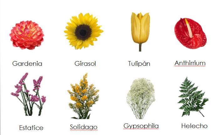 Hermosas im genes de flores con nombres y su origen for Plantas decorativas con sus nombres