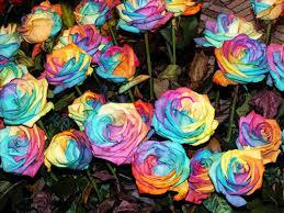 Imagenes Flores exoticas mexicanas