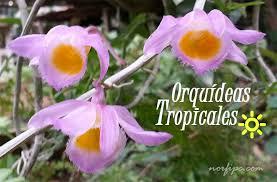 Imagenes Flores exoticas orquidea