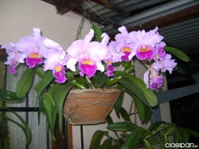 Las Flores Más Lindas Del Mundo orquideas