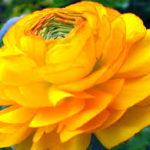 Como descargar imágenes de flores hermosas para dedicar