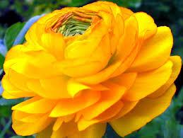 descargar imagenes de flores hermosas amarillas