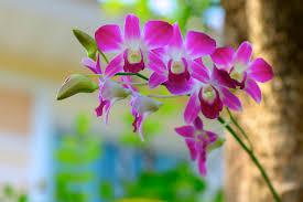 descargar imagenes de flores hermosas naturales