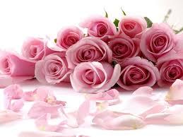 descargar imagenes de flores hermosas rosas