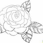 Dibujos De Flores Hermosas Gratis Para Colorear