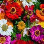Las Flores Más Lindas Del Mundo Con Sus Nombres