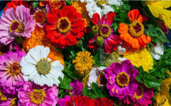 flores bonitas con nombres