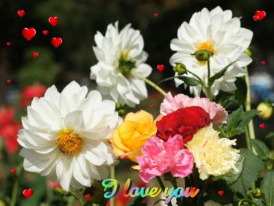 Beautiful flowers Philippine islands