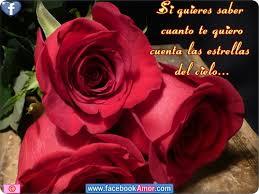 flores lindas con mensajes de amor
