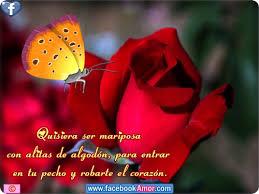 flores lindas con mensajes romanticos