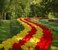 flores naturales hermosas de colores