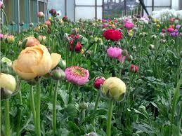 flores naturales hermosas rosas