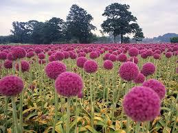 Mira Estas Flores Naturales Hermosas Para Compartir