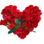 Flores Rojas Hermosas Para Dedicar En Amor Y Amistad