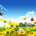 Fotos Bonitas De Flores Para Poner De Fondo De Escritorio