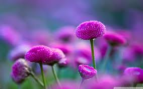 fotos bonitas de flores naturales