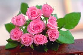 fotos bonitas de flores rosas