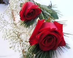 fotos de flores hermosas gratis rosa