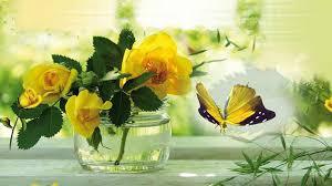 fotos de rosas amarillas con mariposas