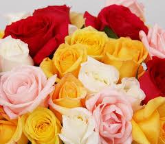 fotos de rosas amarillas y rojas
