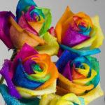Fotos De Rosas De Colores Preciosas Para Descargar