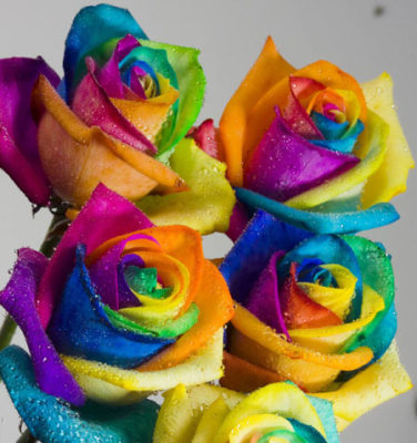 fotos de rosas de colores hermosas