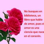 Fotos De Rosas Preciosas Y Románticas Para Conquistar