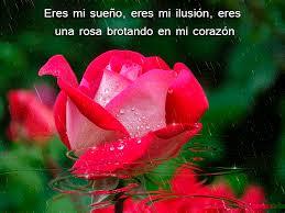 Fotos de rosas preciosas y rom nticas para conquistar im genes de flores hermosas - Fotos flores preciosas ...