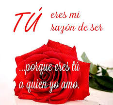 fotos de rosas preciosas rojas