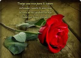 fotos de rosas rojas hermosas romanticas