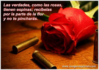 fotos de rosas rojas hermosas verdades