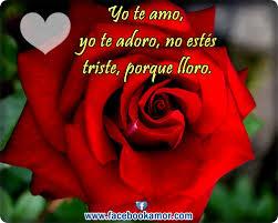 fotos de rosas rojas hermosas yo te amo