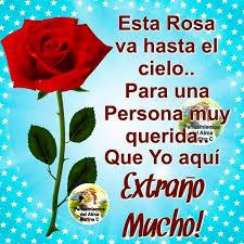 imagen de una rosa hermosa con poema