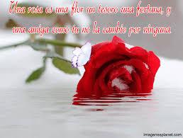 imagen de una rosa hermosa en agua