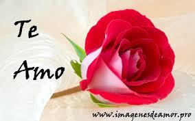 imagen de una rosa hermosa te amo
