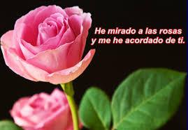 imagenes de flores con mensajes rosas