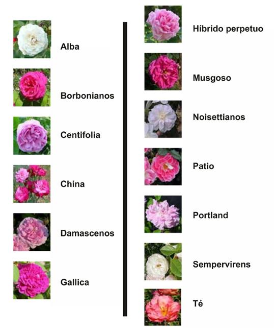 Hermosas im genes de flores con nombres y su origen - Clase de flores y sus nombres ...