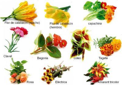 imagenes de flores con nombres jardin