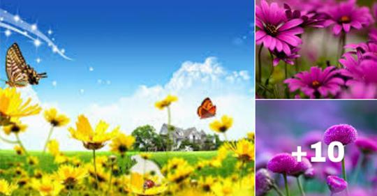 imagenes de flores para descargar