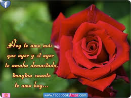 imagenes de hermosas rosas naturales