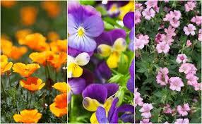 imagenes de las flores mas hermosas de la naturaleza