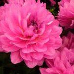 Estas Son Las Imágenes De Las Flores Más Hermosas Del Mundo