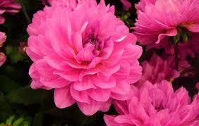 imagenes de las flores mas hermosas del mundo