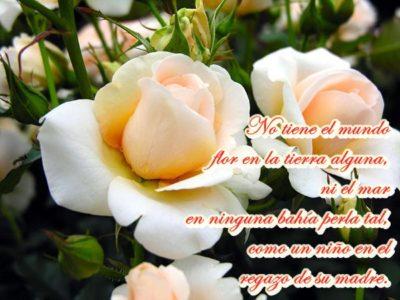 imagenes de rosas blancas con frases madres