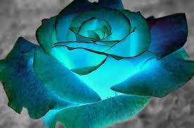 imagenes de rosas lindas preciosas