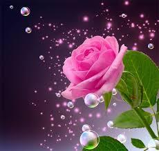 imagenes de rosas preciosas para descargar