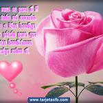 Imágenes Hermosas De Rosas Con Dedicatorias De Amor