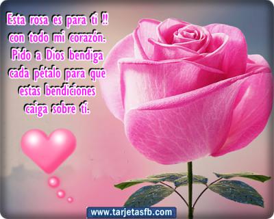imagenes hermosas de rosas frases