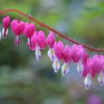 Las Flores Más Hermosas Del Mundo Imágenes Muy Bonitas